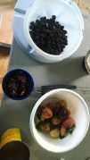 Blackberries, Black Raspberries, and peaches - all picked locally.
